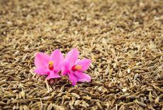 Chimenul și chimionul - mirodenii care nu trebuie să fie confundate